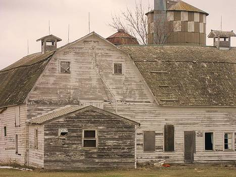 Old Dairy Farm by Trish Pitts