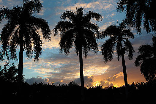 Palm Tree Silhouette by Karen Lee Ensley