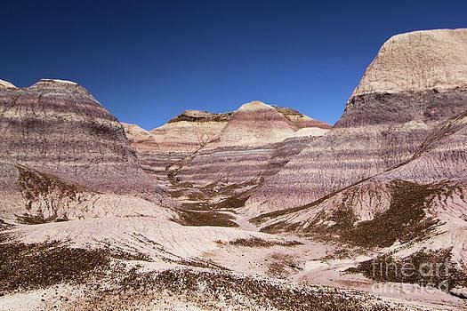 Adam Jewell - Petrified Forest Blue Mesa