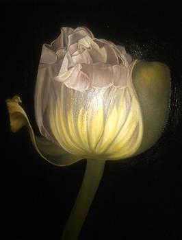 Poppy by Barbara Ruzzene