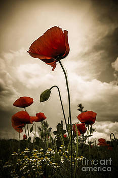 Red Weed by Martin Dzurjanik
