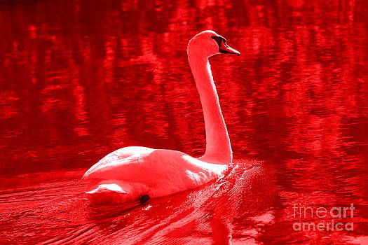 Serenity Swan by Curtis Brackett