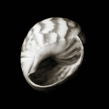 Charmian Vistaunet - Shell - Sepia Tone