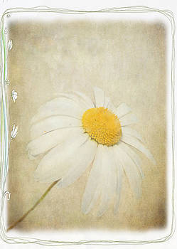 Simple Daisy by Julie Williams