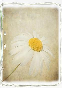 Julie Williams - Simple Daisy