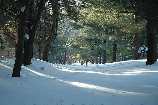 Snowy Wilderness by Rafael Figueroa