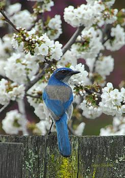 Donna Blackhall - Spring Has Sprung