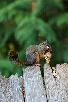 Squirrel by Marsha Thornton