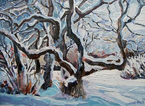 Tangled Branches with Snow by Wendy Head