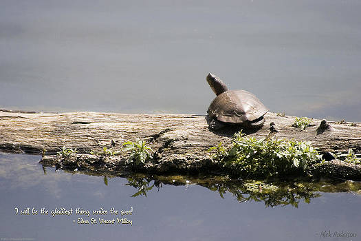 Mick Anderson - Turtle on a Log