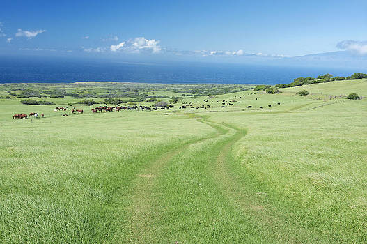 Usa Hi Kohala Horse Ranch by Rob Tilley