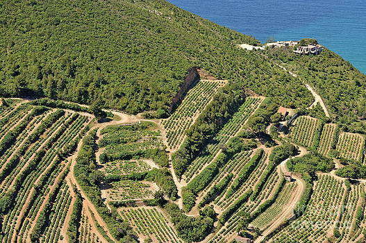 Sami Sarkis - Vineyards on Mediterranean coast