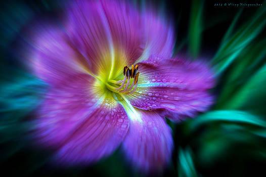 Wild Beauty by Virag Yelegaonkar