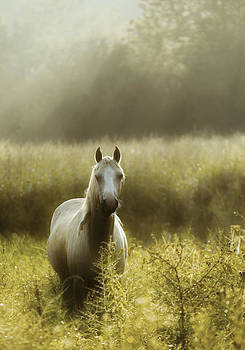 Yellow Horse by Ron  McGinnis