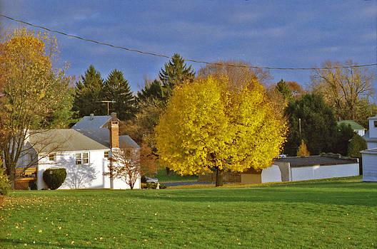 Yellow Tree by Bob Whitt