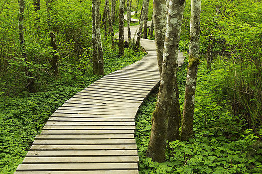 Boardwalk Across Wetland. Duthie Hill by Don Mason