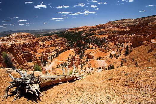 Adam Jewell - Bryce Canyon