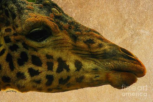 Cheryl Young - Giraffe