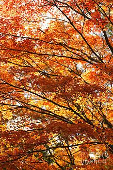 Gaspar Avila - Maple tree foliage