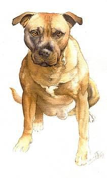 Murphy The Dog by Sandra Phryce-Jones