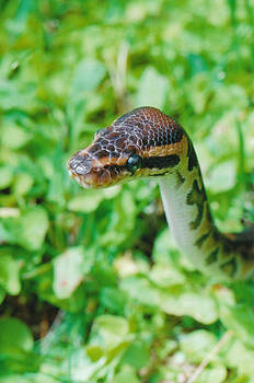 Snake in the grass by Brian Beller