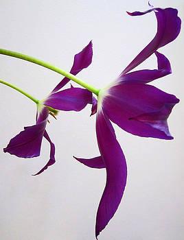 2 Tulips by Joan Powell