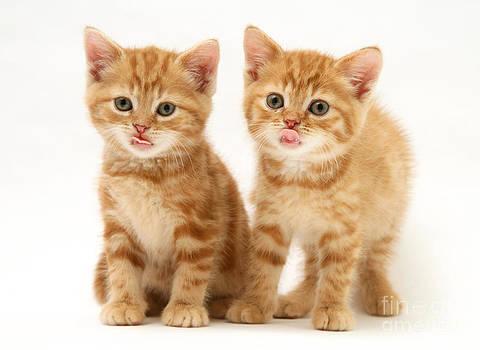 Jane Burton - Kittens
