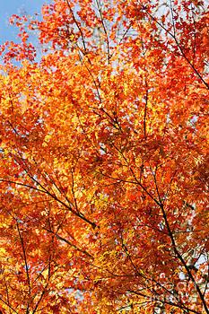 Gaspar Avila - Autumn colors