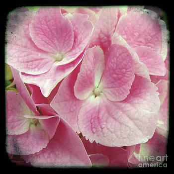 Ricki Mountain - Photography Floral art