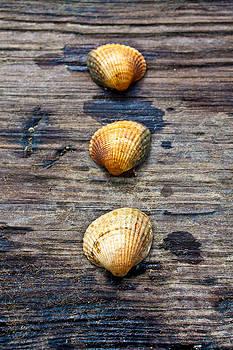 3 Shells by Aidan Minter