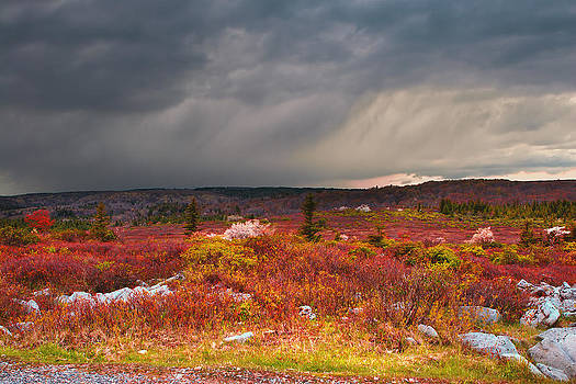 Mary Almond - Dolly Sods Wilderness