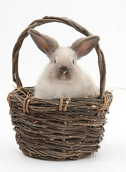 Mark Taylor - Bunny In A Basket