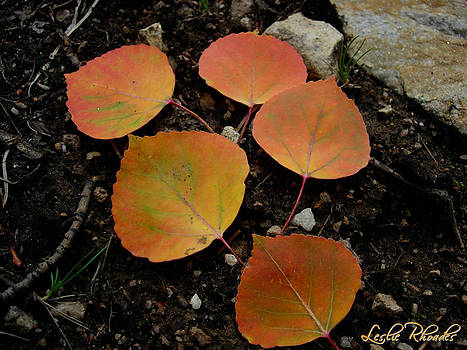 Leslie Rhoades - 5 Oranges
