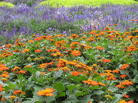Alfred Ng - spring color