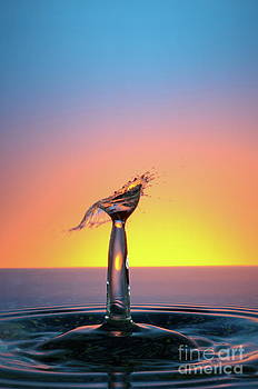 Sami Sarkis - Water drops colliding to shape an umbrella splash