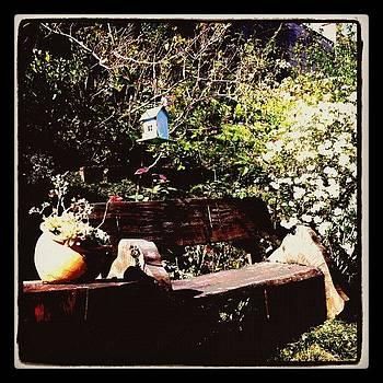 A Backyard by Dani Pimenta