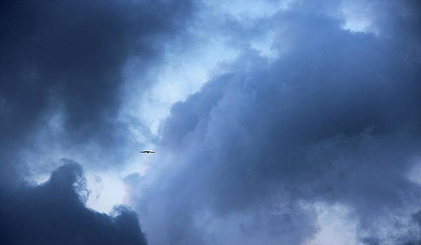 A bird flying in cloudy sky by Gal Ashkenazi