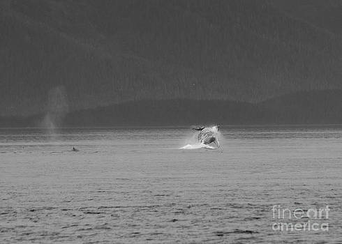 Darcy Michaelchuk - A Distant Breaching Whale in Black and White