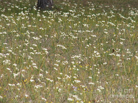 A field of spring flowers by Cindy Hudson