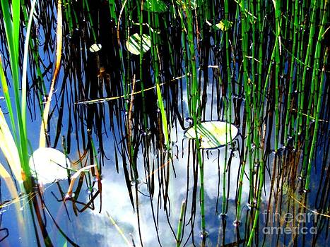 A frog Paradise  by Ashley Vipond