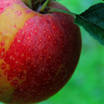 A Is For Apple by Shaileen Landsberg