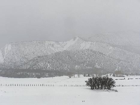FeVa  Fotos - A January Day