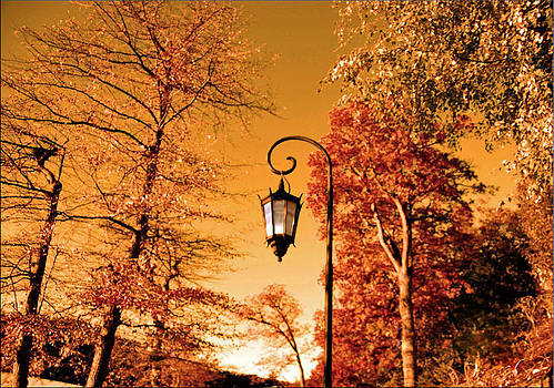 A lamp in the forest by Janet G T