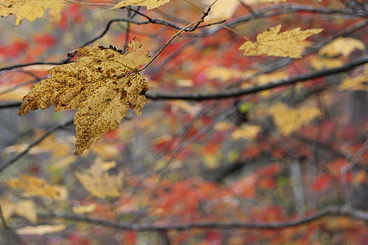 A Leaf Hangs On by Tony Hammer