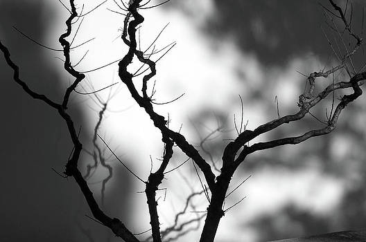 A Leafless Shadow by Dias Dos Reis