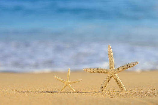 A pair of Star Fish On Golden Beach by Hegde Photos