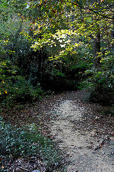 A Path In The Woods by Bob Whitt