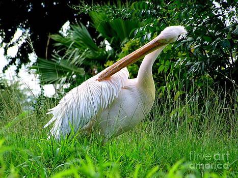 Mary Deal - A Preening Stork