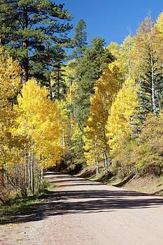 Tim Grams - A Road through Autumn