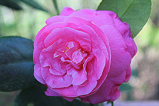 A Rose By Anyother Color by Bob Whitt